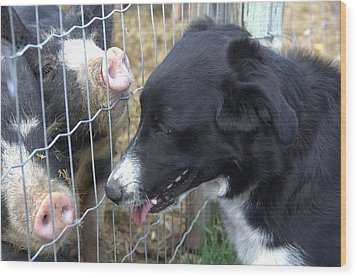 Dog And Pigs Wood Print by Kathy Bassett