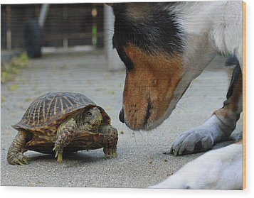 Dog And Turtle Wood Print by Shoal Hollingsworth