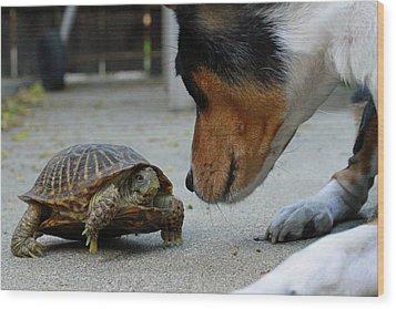 Dog And Turtle Wood Print