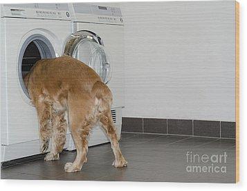 Dog And Washing Machine Wood Print by Mats Silvan