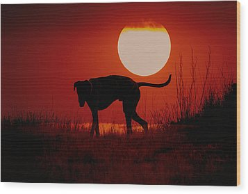 Dog At Sunset Wood Print by Jana Thompson