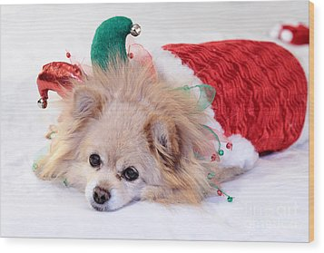 Dog In Christmas Costume Wood Print