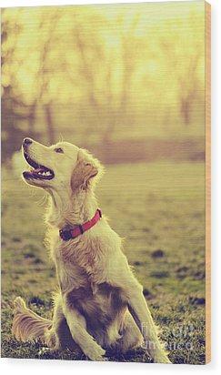 Dog In The Park Wood Print by Jelena Jovanovic