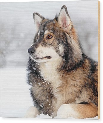 Dog In The Snow Wood Print by Grant Glendinning