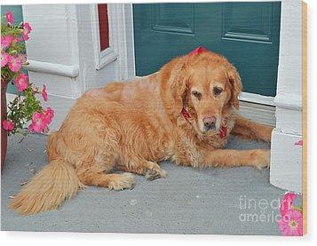 Dog In Waiting Wood Print by Eva Kaufman