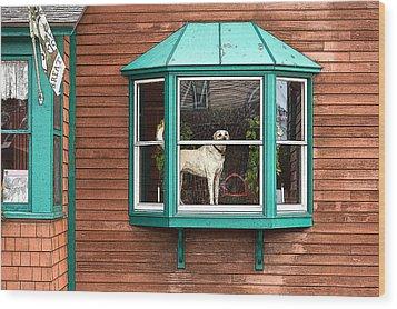 Dog In Window Wood Print