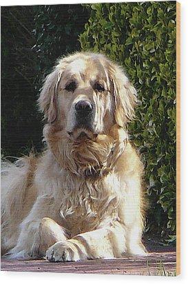 Dog On Guard Wood Print by Susan Savad