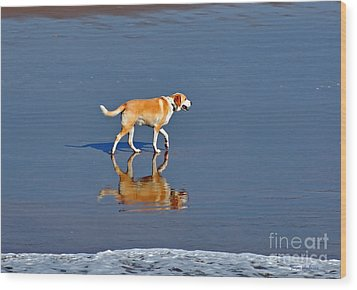 Dog On Water Mirror Wood Print by Susan Wiedmann