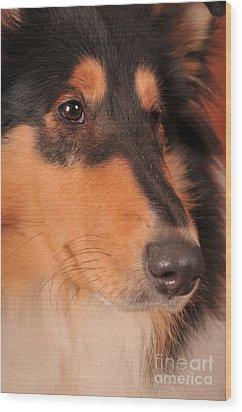 Dog Portrait Wood Print by Randi Grace Nilsberg