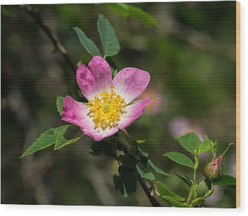 Wood Print featuring the photograph Dog-rose by Leif Sohlman