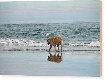 Dog Walking Wood Print by Cynthia Guinn