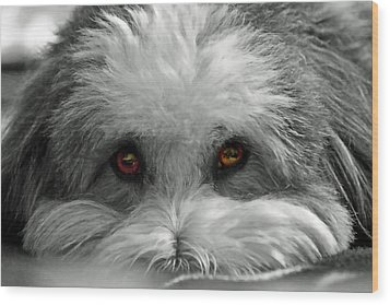 Coton Eyes Wood Print by Keith Armstrong