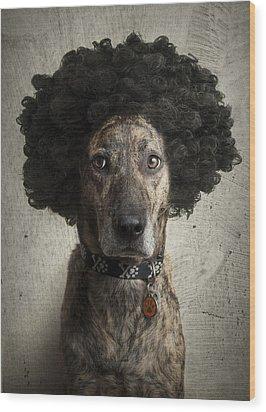 Dog With A Crazy Hairdo Wood Print by Chad Latta