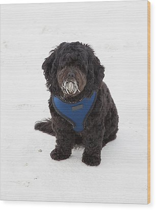 Doggone Good Beach Fun Wood Print