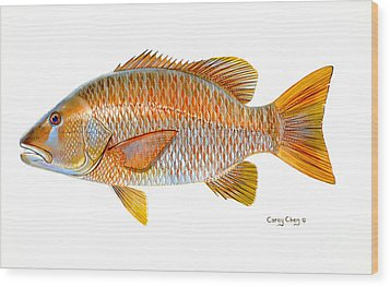 Dogtooth Snapper Wood Print by Carey Chen