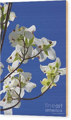 Wood Print featuring the photograph Dogwood Beauty by Tannis  Baldwin