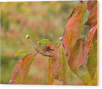 Wood Print featuring the photograph Dogwood Berrie by Nick Kirby