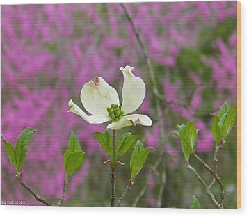 Dogwood Bloom Against A Redbud Wood Print