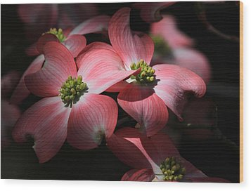 Dogwood Blossoms Wood Print by Donna Kennedy
