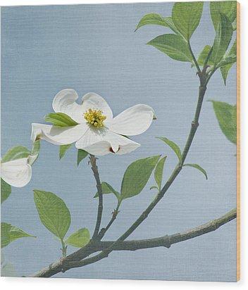 Dogwood Blossoms Wood Print by Kim Hojnacki