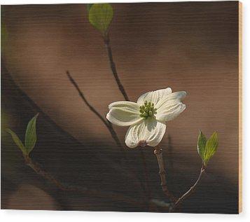Dogwood Bokeh Painting Wood Print by Lara Ellis
