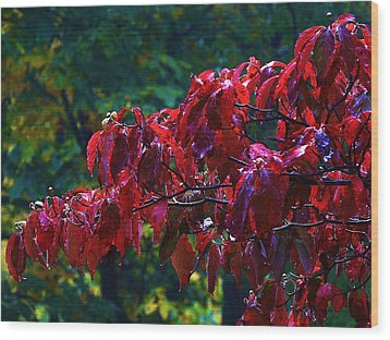 Dogwood Branch In Autumn Wood Print by Bill Shuman