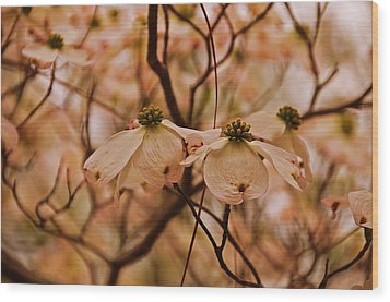 Wood Print featuring the photograph Dogwood Day Afternoon by John Harding