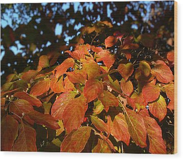 Dogwood In Autumn Colors Wood Print by MM Anderson