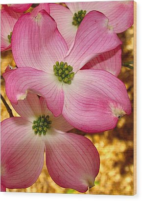 Dogwood In Pink Wood Print