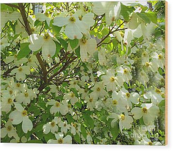 Wood Print featuring the photograph Dogwood Kissed By The Sun by Becky Lupe