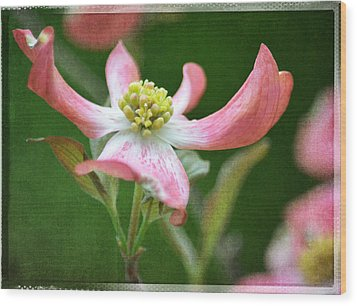 Dogwood Season Number Five Wood Print by Lena Wilhite