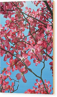 Dogwood Tree Flowers And Blue Sky Wood Print