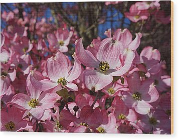 Dogwood Tree Flowers Art Prints Floral Wood Print by Baslee Troutman