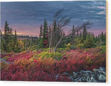 Dolly Sods Windswept Sunset Wood Print by Mary Almond