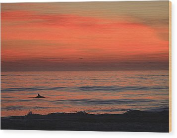 Dolphin At Cape Hatteras Wood Print by Mountains to the Sea Photo