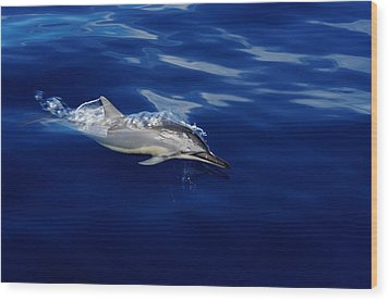 Dolphin Breaking Free Wood Print by John  Greaves