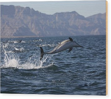 Wood Print featuring the photograph Dolphin Dance by Kandy Hurley