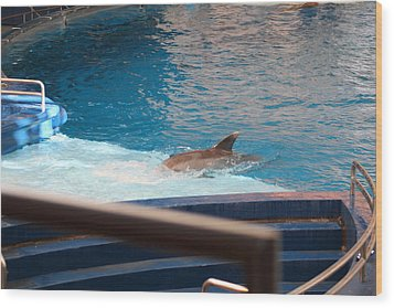 Dolphin Show - National Aquarium In Baltimore Md - 1212103 Wood Print by DC Photographer