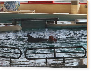 Dolphin Show - National Aquarium In Baltimore Md - 1212111 Wood Print by DC Photographer