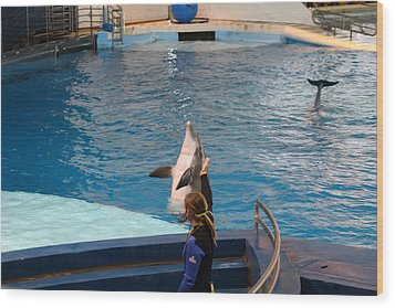Dolphin Show - National Aquarium In Baltimore Md - 1212145 Wood Print by DC Photographer