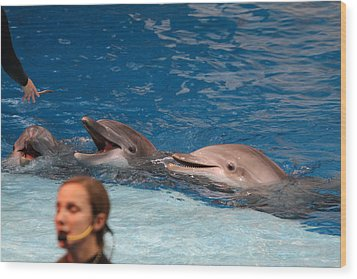 Dolphin Show - National Aquarium In Baltimore Md - 1212177 Wood Print by DC Photographer