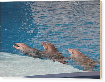 Dolphin Show - National Aquarium In Baltimore Md - 1212183 Wood Print by DC Photographer