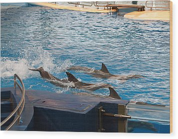 Dolphin Show - National Aquarium In Baltimore Md - 1212187 Wood Print by DC Photographer