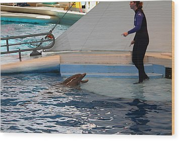 Dolphin Show - National Aquarium In Baltimore Md - 1212195 Wood Print by DC Photographer