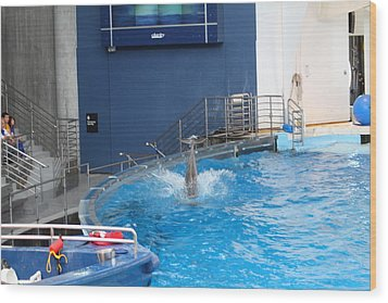 Dolphin Show - National Aquarium In Baltimore Md - 1212204 Wood Print by DC Photographer
