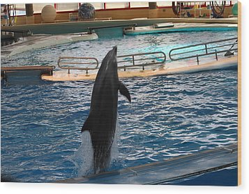 Dolphin Show - National Aquarium In Baltimore Md - 1212209 Wood Print by DC Photographer