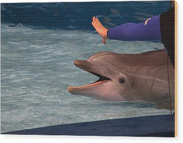 Dolphin Show - National Aquarium In Baltimore Md - 1212220 Wood Print by DC Photographer