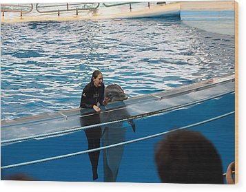 Dolphin Show - National Aquarium In Baltimore Md - 1212229 Wood Print by DC Photographer
