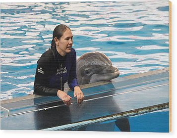 Dolphin Show - National Aquarium In Baltimore Md - 1212230 Wood Print by DC Photographer