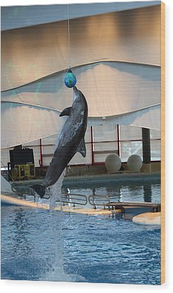 Dolphin Show - National Aquarium In Baltimore Md - 1212234 Wood Print by DC Photographer